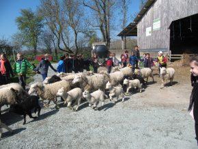 Les CE1 et CP/CE1 à la ferme de Ker Madeleine
