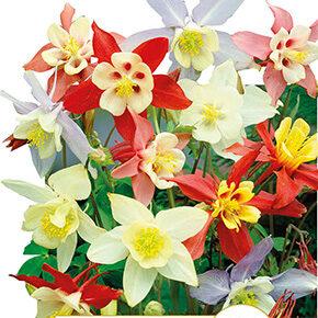 Opération fleurs de printemps